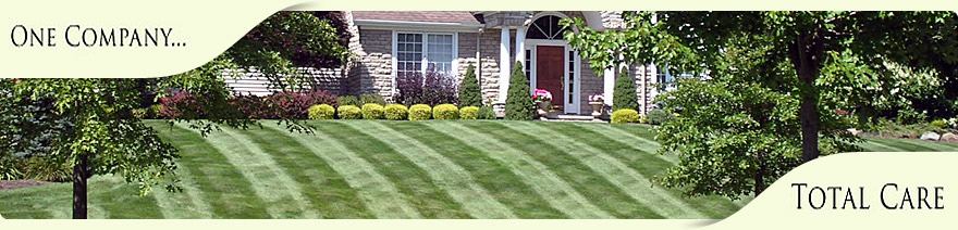 well manicured lawn back dropped by well trimmed landscape plants