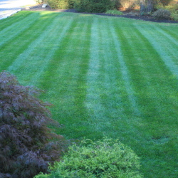 displaying results of T&J landscaping lawn mowing service