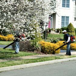 staff using leaf blowers to clean up left over leaves while tree is in spring bloom